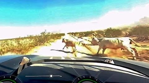 Trophy Truck Vaporizes Two Random Cows in the Desert at Over 110 MPH